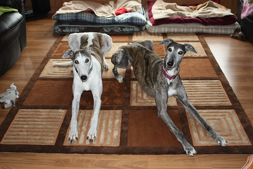 wez on ur carpet, waitin fer R cookies!