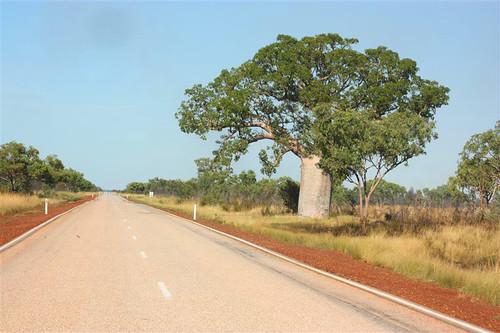 1955 kimberley