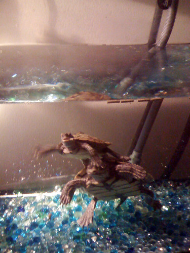 picture of neighbor's pet turtles