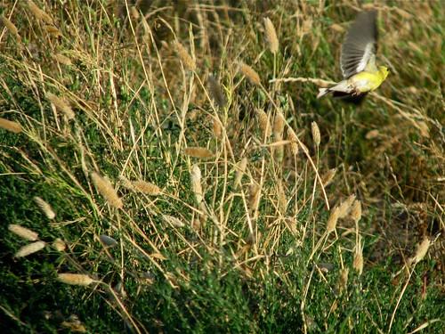 yellow + wild + free