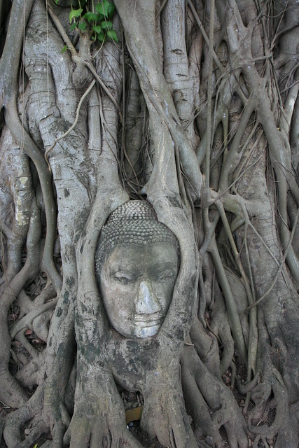 Buda entre raíces