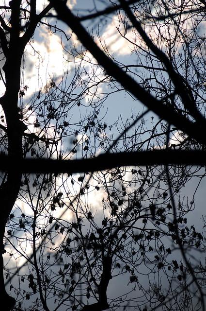 Troncos y hojas