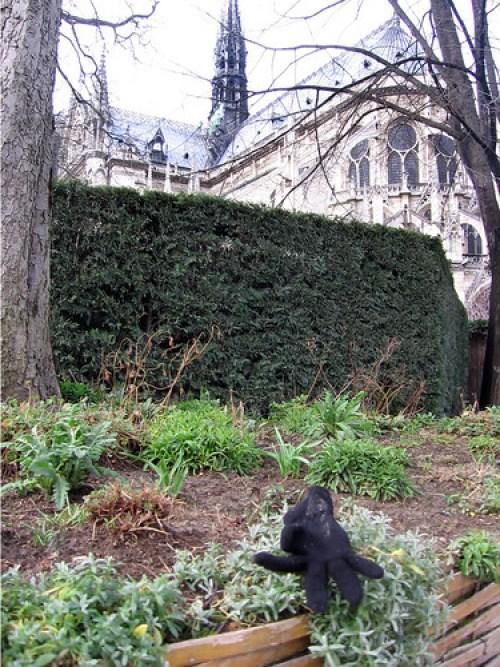 Lost Glove #20, Notre Dame, Paris