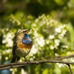 Tunes of Spring | Весенние мотивы