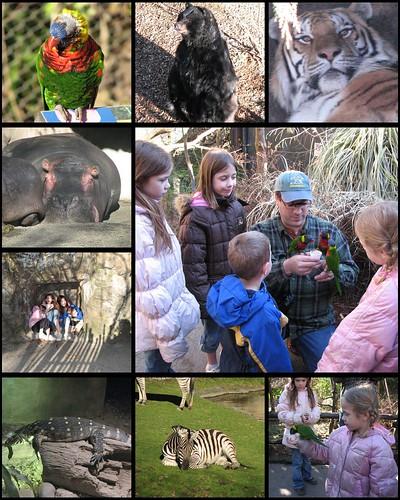 Jan 2009 Zoo 1