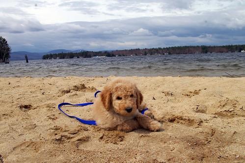 Cooper 8 weeks