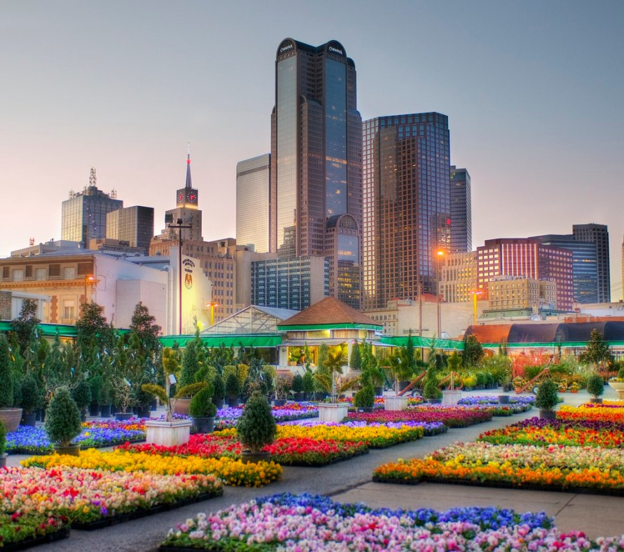 Downtown Dallas from the Flower Market (by Stuck in Customs)