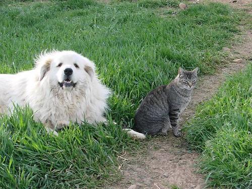 Doug Ramseys guard dog Sarah and his cat Rascal.