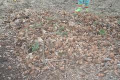 Pinecone Pile 2