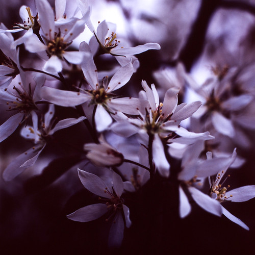 Flowers from me garden