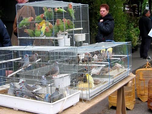Bird market.