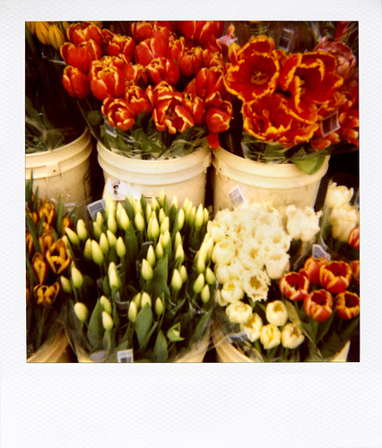 'roid week 2009: A gathering of tulips