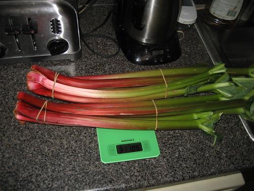 giant rhubarb!
