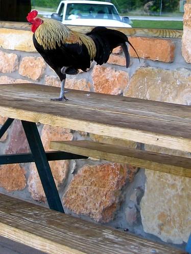 Roadside Rooster.