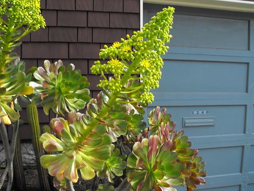 erect succulent