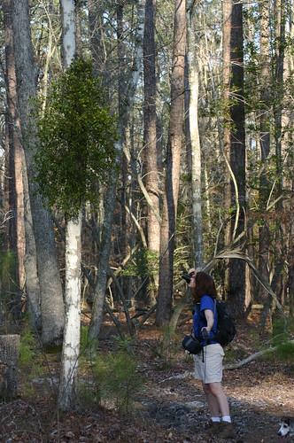 Vicky Photographing Mistletoe