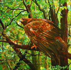 McNeil K Forest Sentinal