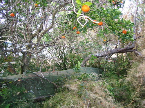 canoe and orange trees