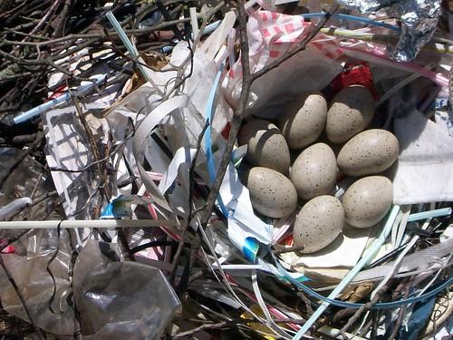 Rubbish Nest