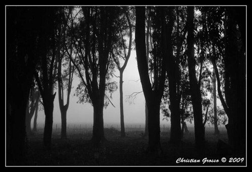 "Niebla • <a style=""font-size:0.8em;"" href=""http://www.flickr.com/photos/20681585@N05/3329842472/"" target=""_blank"">View on Flickr</a>"