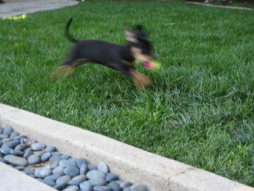 Zoey in Flight 4-12-09