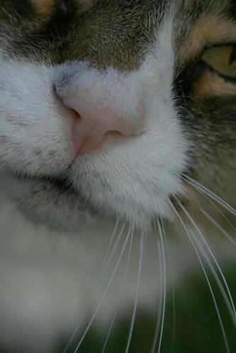 Hobbes Closeup 2
