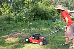 mowing up the weeds