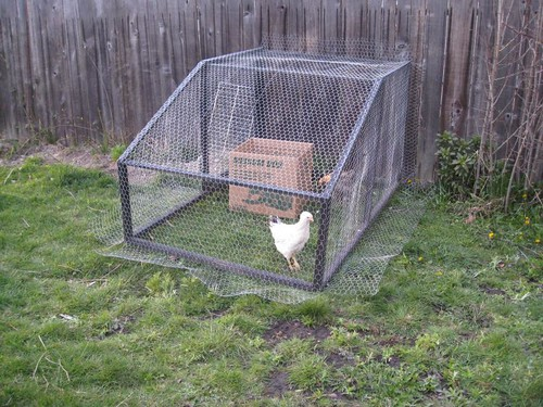 How To Convert A Dog Kennel Into A Chicken Coop