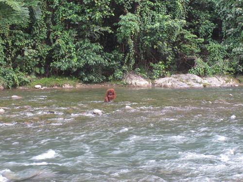 Gunung Leuser Fluss