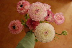 a bouquet of ranunculi (a very late YIP: 88)