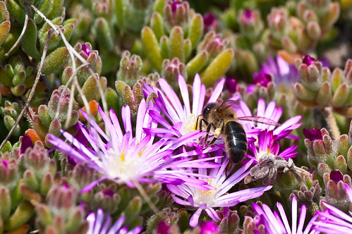Entre las flores del campo