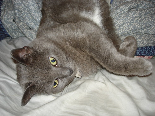 KittyQueen: Enough photos already!  I want cuddling!