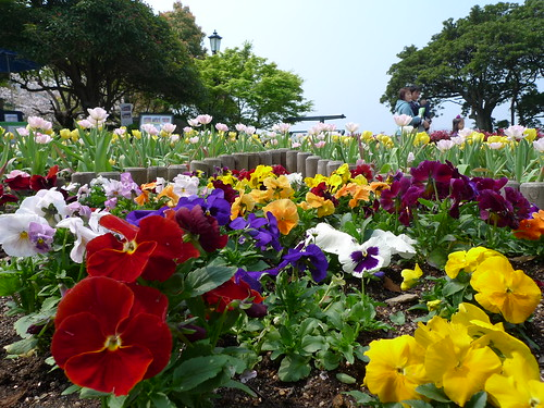 Glover garden @ Nagasaki