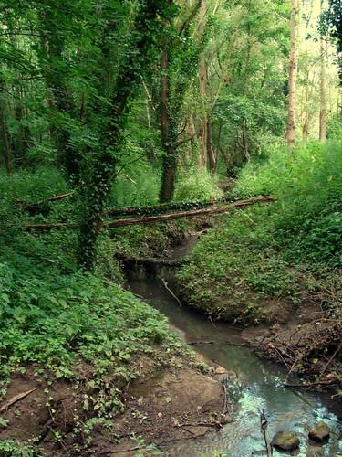 De Weesbeek in het Silsombos
