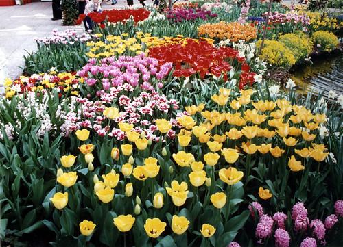 Keukenhof Gardens, Netherlands