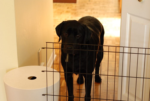 Duke the Big Pup