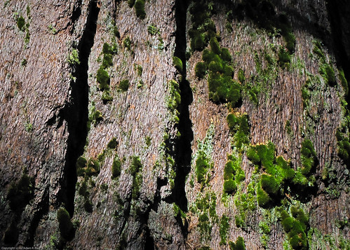 Moss on bark by you.