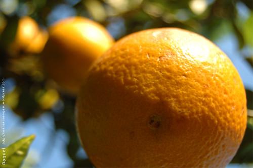 Perspectiva anaranjada