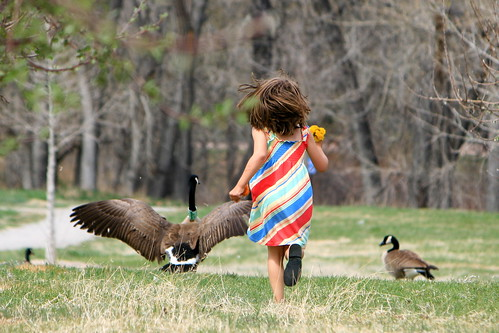 Running with the Geese.