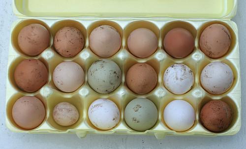 Palmarosa-Eggs