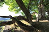 Photo:Trees / 木(き) By