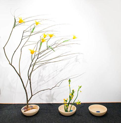 wind-tree-5940