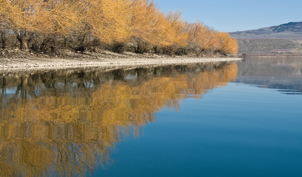 Reflections on the Columbia