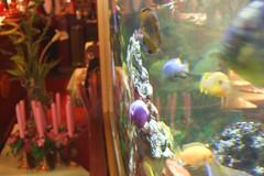 Das Aquarium mit landestypischem Tischschmuck