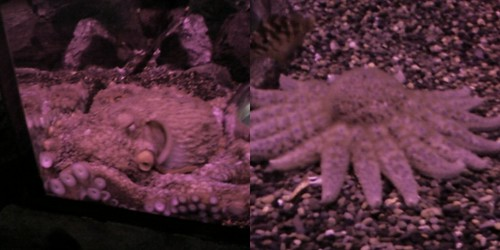 aquarium3 collage