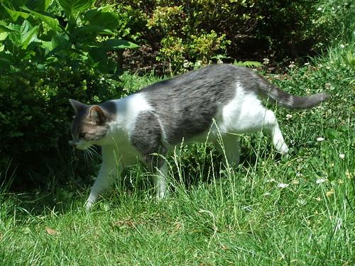 Trilly in giardino