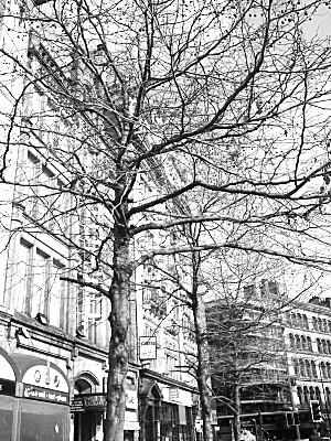 buildings seen through the trees. Manchester has some lovely Victorian/Edwardian Architecture.