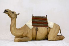 Finished Camel