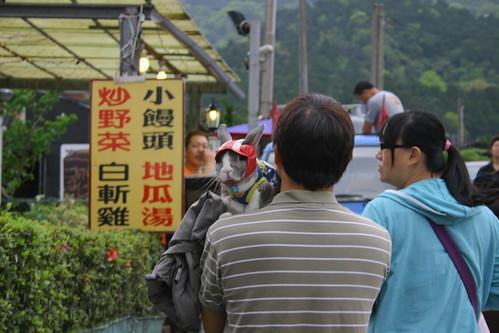 Sonntags mit dem Liebling auf dem Yangmingshan spazieren gehen, c by AK