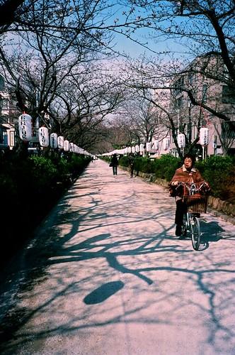 [鎌倉]沒有花的花徑